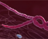 Latest News: About Ebola